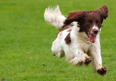 dog-running7-2
