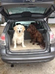 Doggie limo service in London, Ontario