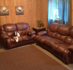 Plush pups chill on the leather in the dog boarding lounge