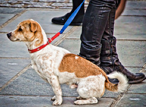 Leashed and obedient dog with its owner