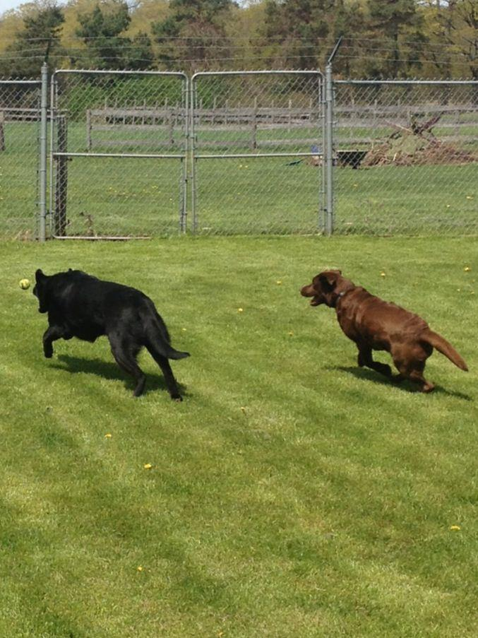 Dog Daycare In London Ontario