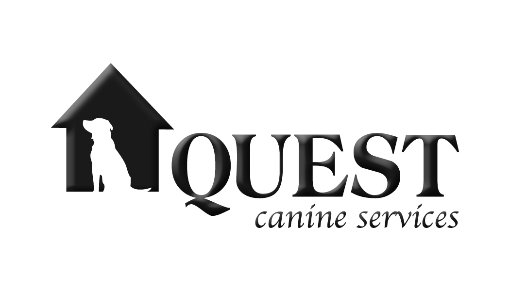 Dog boarding and dog training services - Quest Canine London
