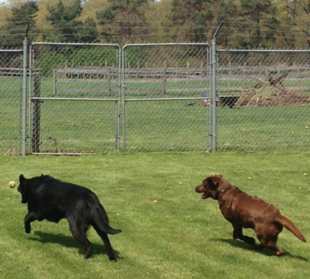 Carefree and cage-free dogs