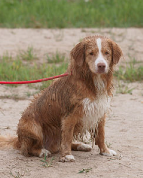 Wet dog after a bout of watery fun